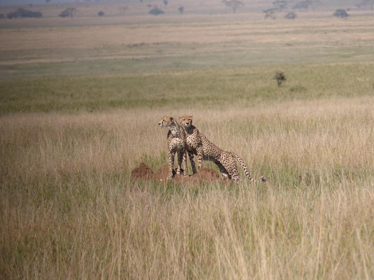 645171ba3103b9 Marije Walbeek Serengeti ...